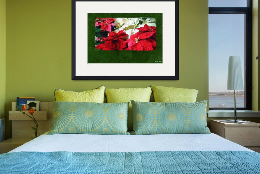 """Mixed Color Poinsettias 3&quot  (2009) by ChristopherInMexico"