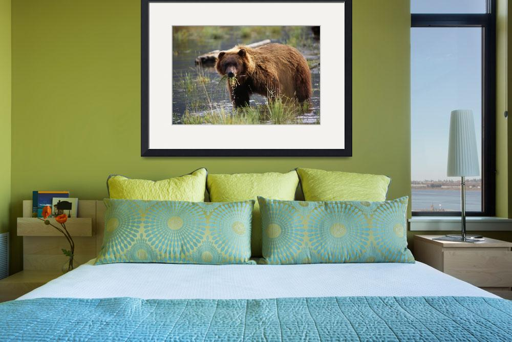 """""""Brown Bear With Mouth Full Of Grass, Alaska Wildli&quot  by DesignPics"""