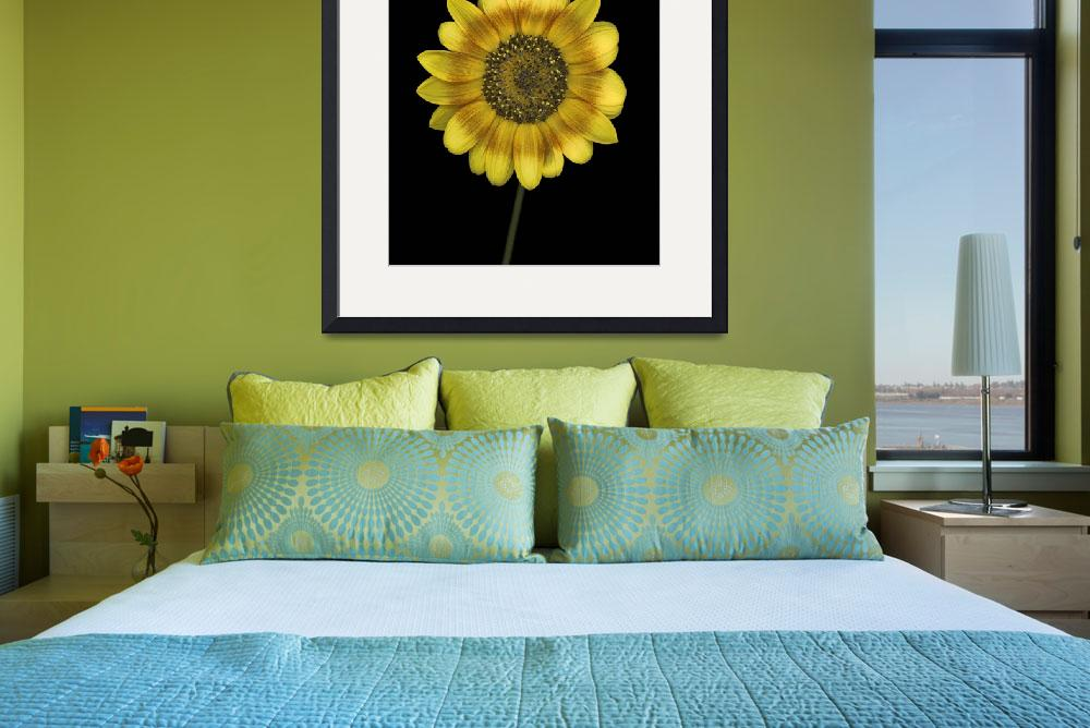"""""""Multi-colored Sunflower&quot  (2012) by OGphoto"""