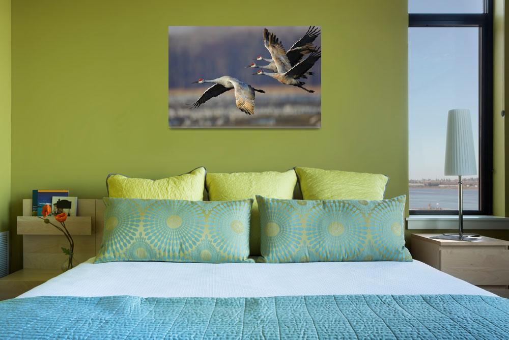 """Sandhill Crane Flock&quot  by WorldDesign"