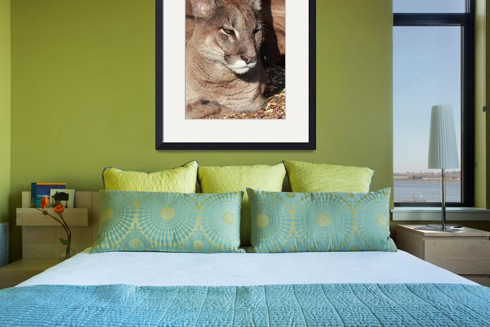 """""""RW1460 Mountain Lion&quot  (2013) by loversdream"""