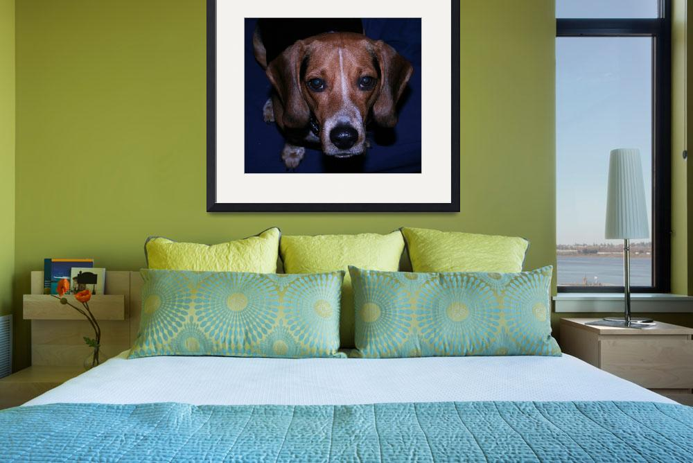 """Barney the Beagle&quot  (2008) by worldchampscwsox"