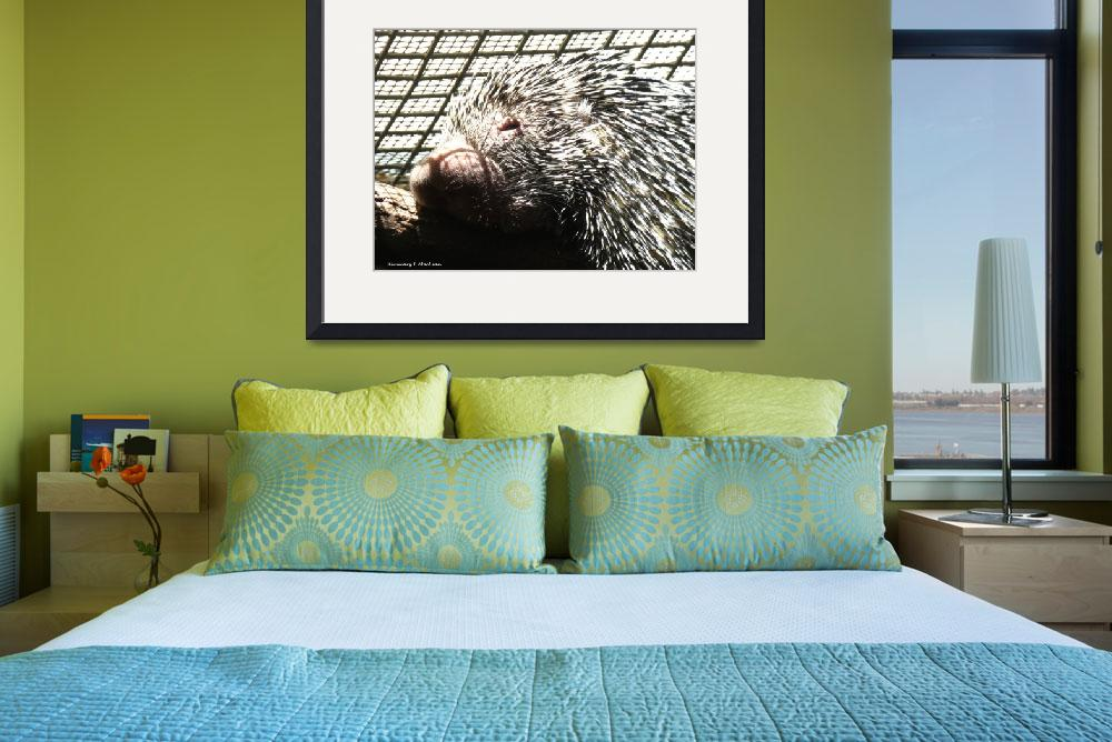 """""""A Porcupine Portrait&quot  (2019) by Kimmary"""