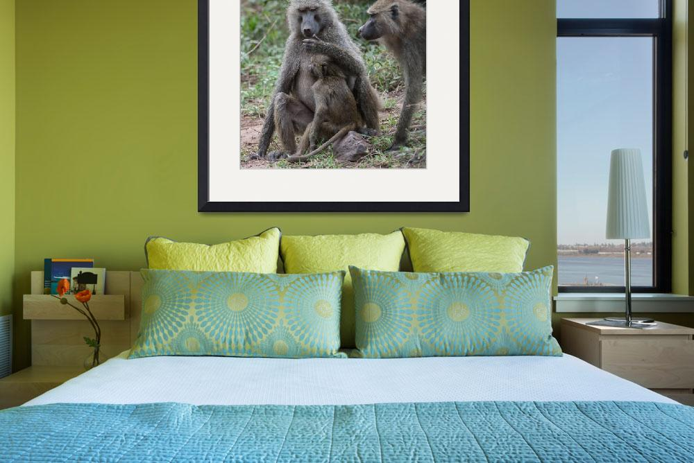 """""""Baboon Mom and Baby&quot  (2014) by SederquistPhotography"""