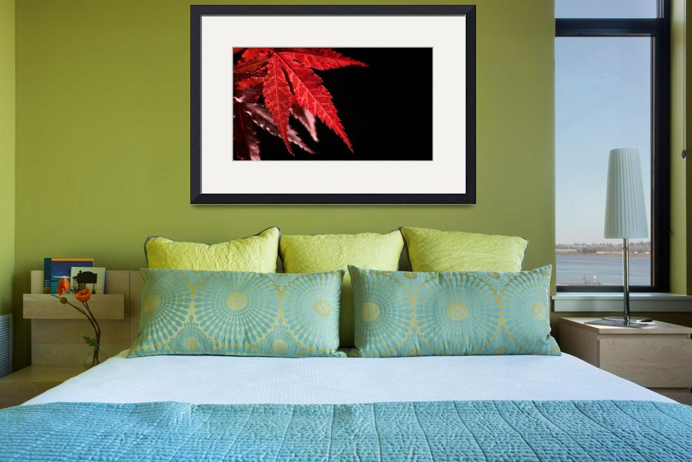 """""""Japanese Maple&quot  (2009) by maxblack"""