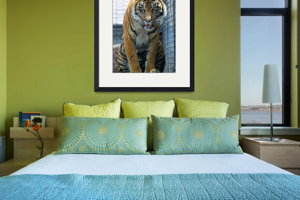 """""""Tiger&quot  (2010) by bjimages"""