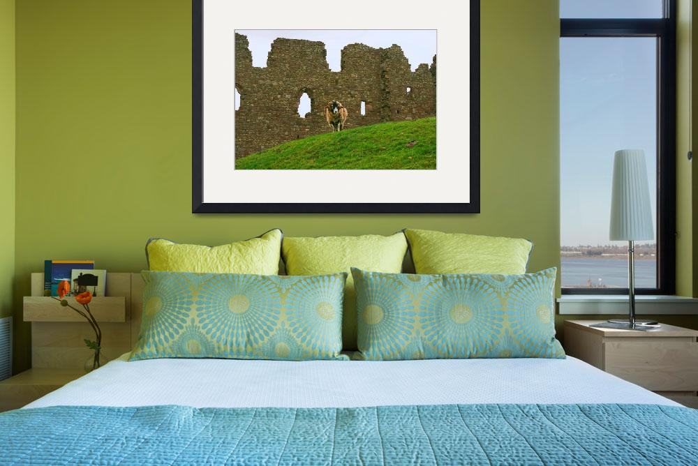 """Ram and Castle Wall, Wales, United Kingdom""  by richdelmastro"