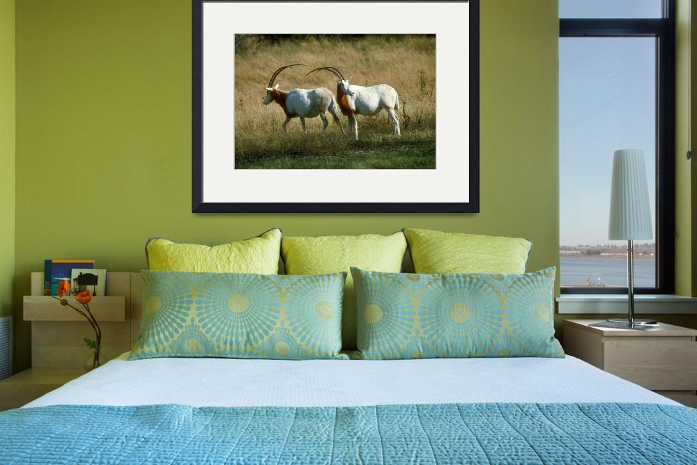 """Endangered Scimitar Horned Oryx&quot  by ArtLoversOnline"