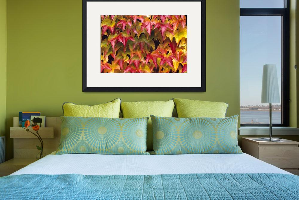 """""""Close-Up Of Group Of Fall Colored Ivy Growing Toge""""  by DesignPics"""