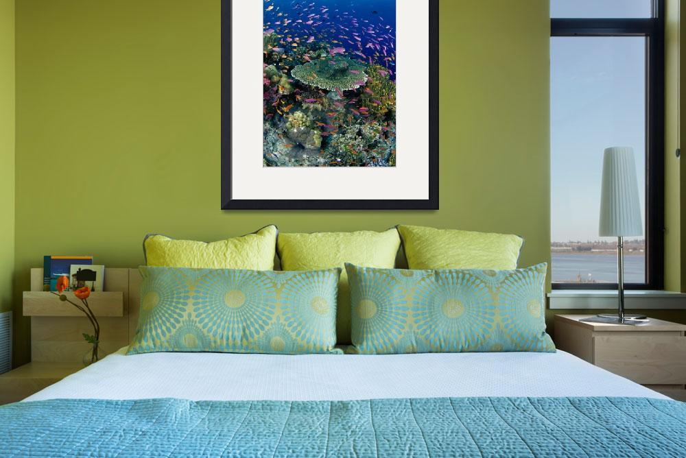 """""""Fiji, Hard Coral Reef Scene With School Lyretail A&quot  by DesignPics"""