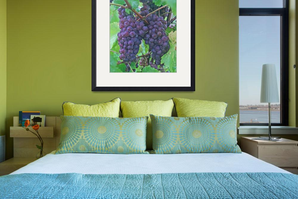 """Vineyards of the Fingerlakes""  (2007) by daisyjoan"