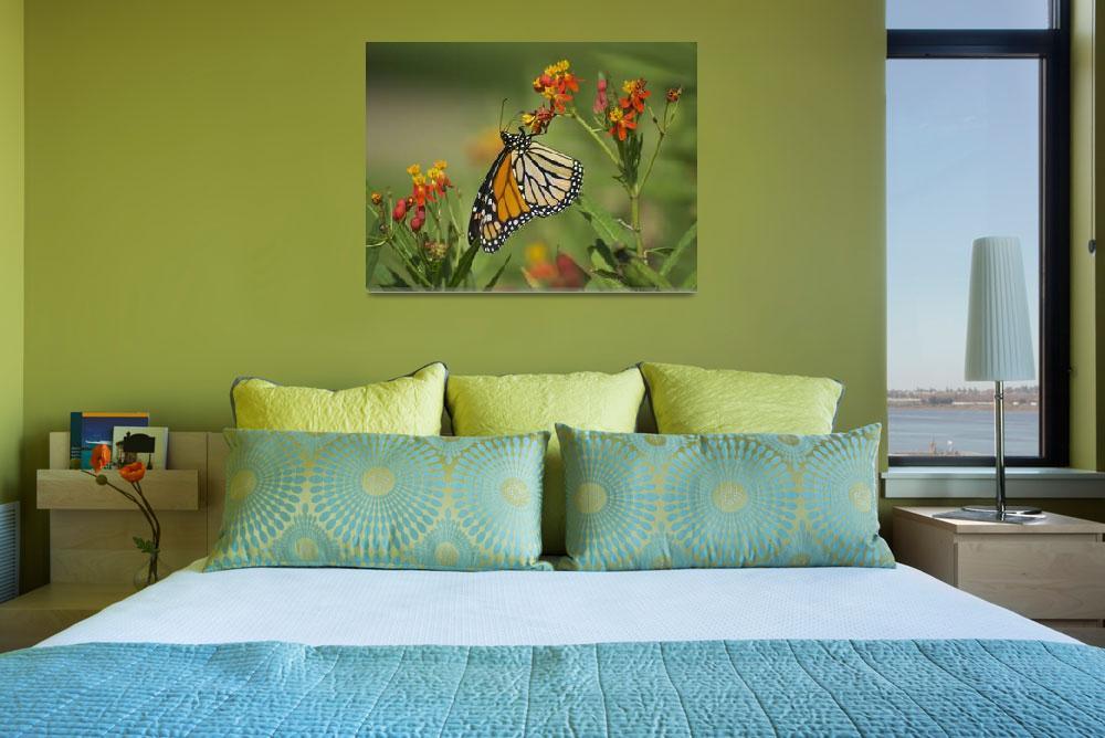 """Hawaiian Monarch&quot  (2010) by MGPPhotography"
