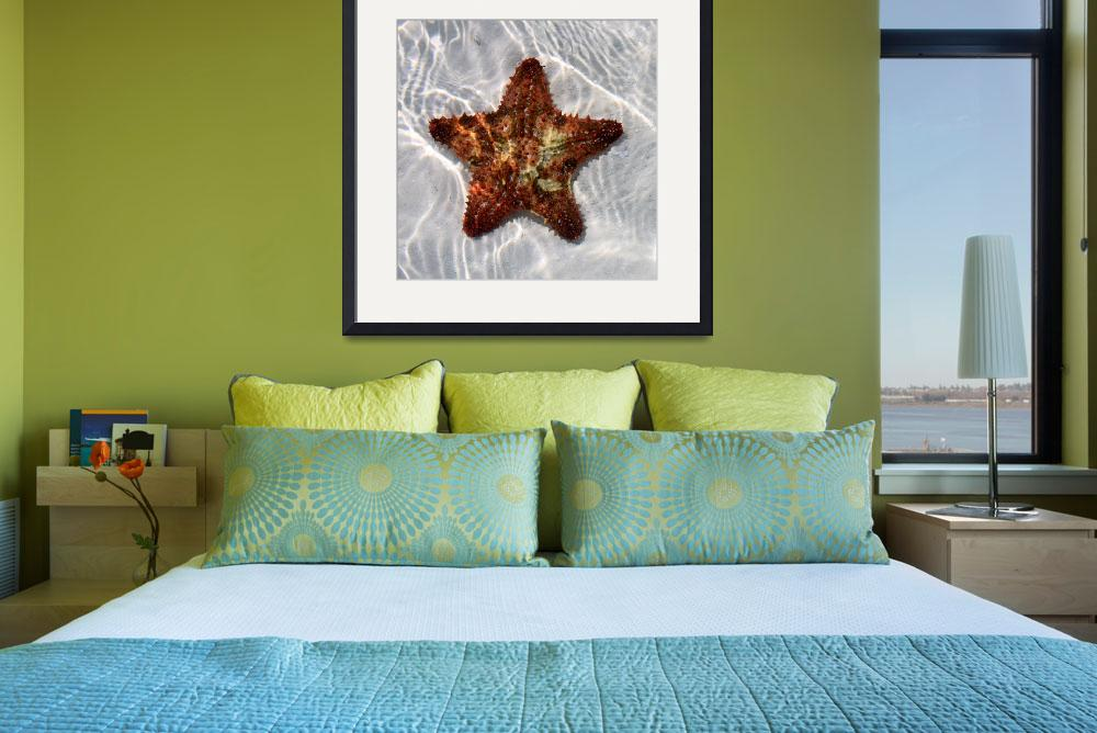 """""""Starfish&quot  (2011) by Laura_Collins"""