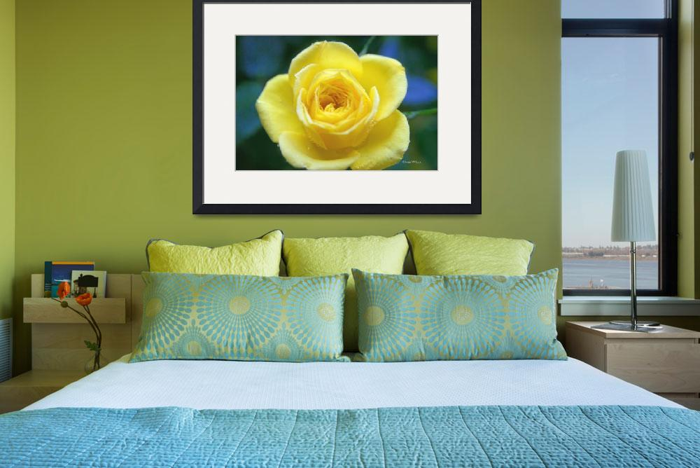 """""""Yellow Rose Of Friendship&quot  (2008) by daisyjoan"""