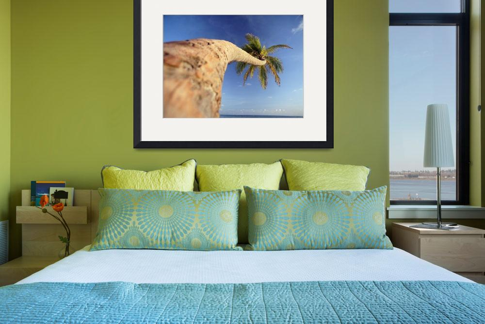 """Palm Tree Above Bavaro Beach At Dawn, Punta Cana&quot  by DesignPics"