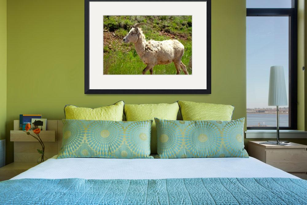 """""""Custer Bighorn Sheep&quot  (2010) by Johnson-Miles"""