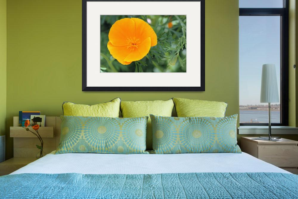 """Californian Poppy&quot  (2011) by loversdream"