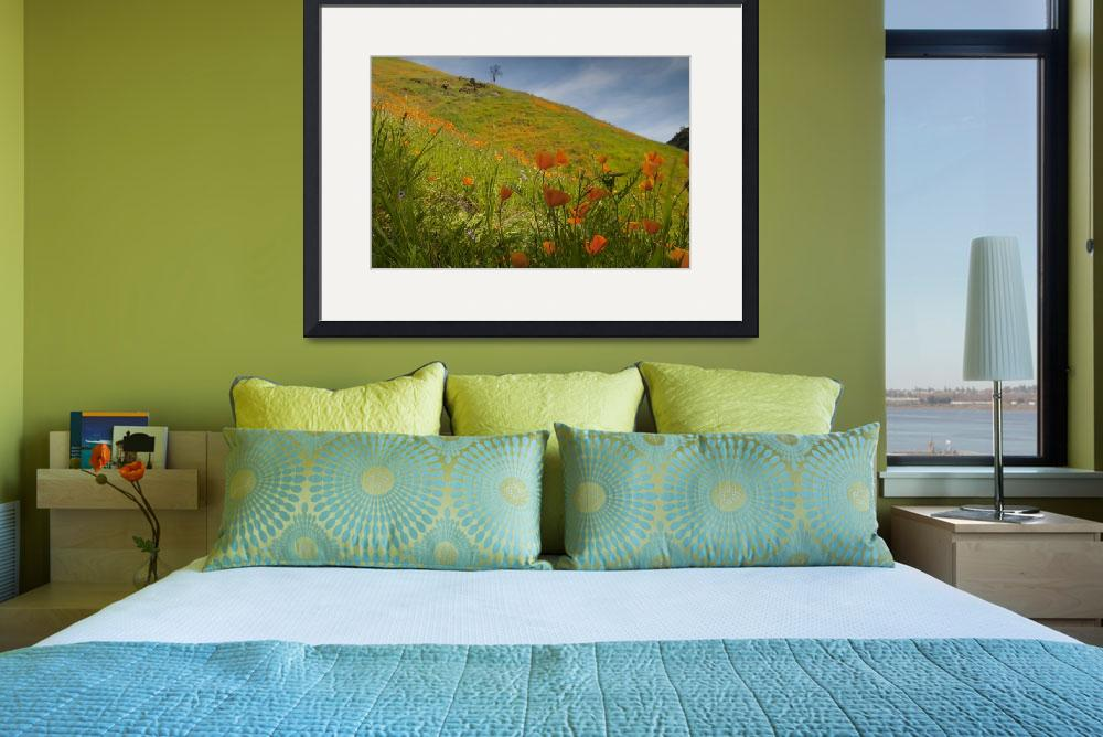 """""""Poppies in Shadow on Hillside&quot  (2010) by SederquistPhotography"""