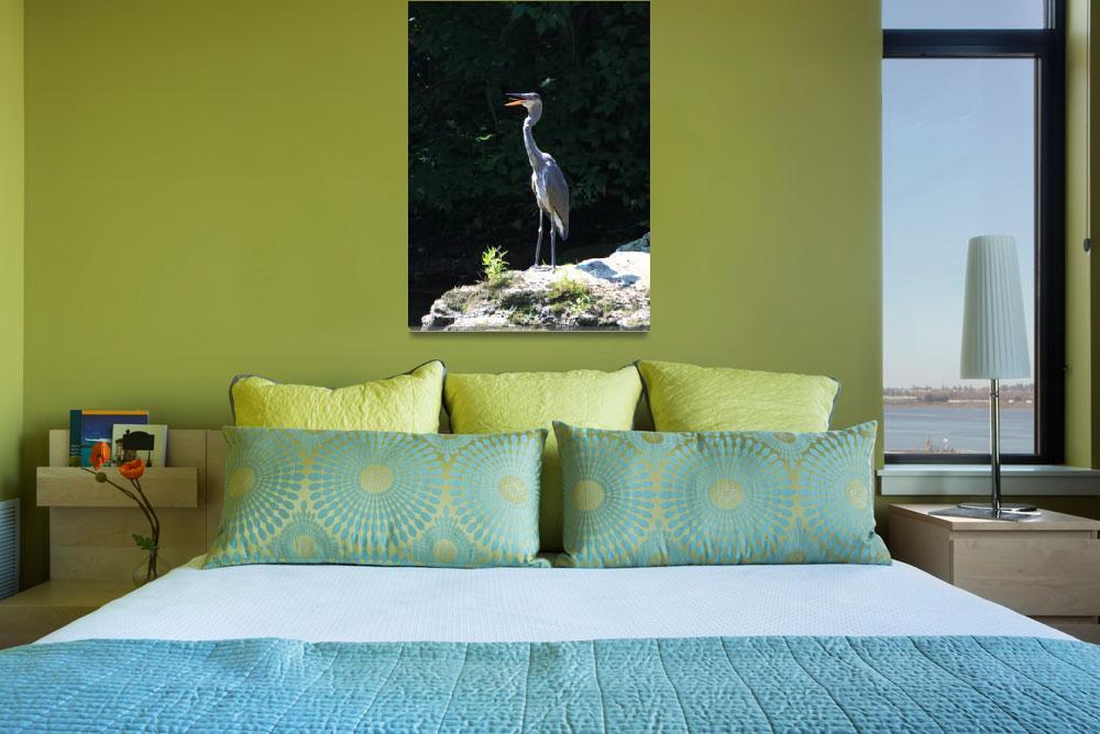 """Grey Heron""  by feophotos"