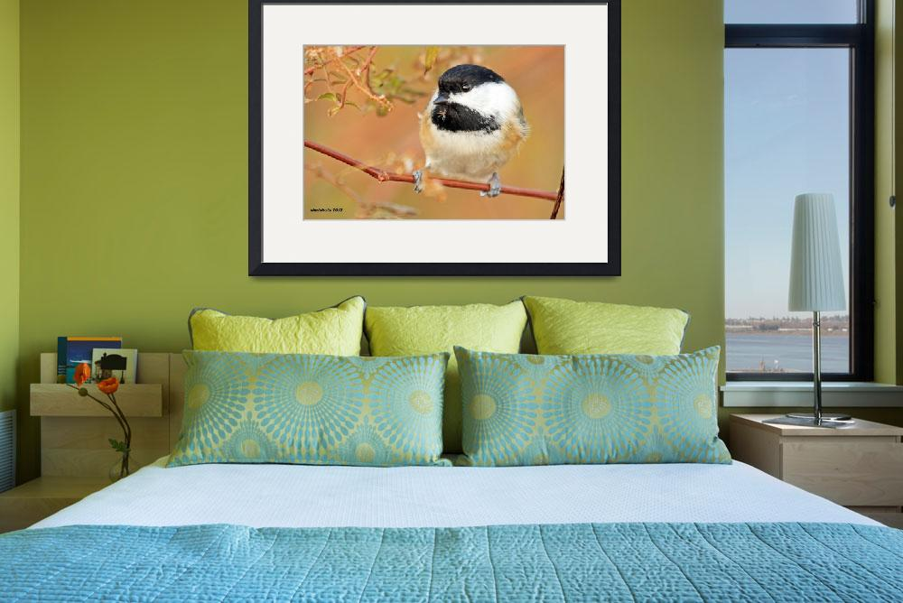 """""""Black-capped Chickadee&quot  (2012) by shelshots"""