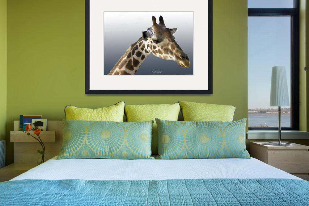 """Giraffe head&quot  (2009) by Jaimie"