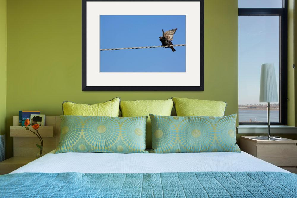 """""""Bird on a wire (starling)&quot  (2010) by Albertphoto"""