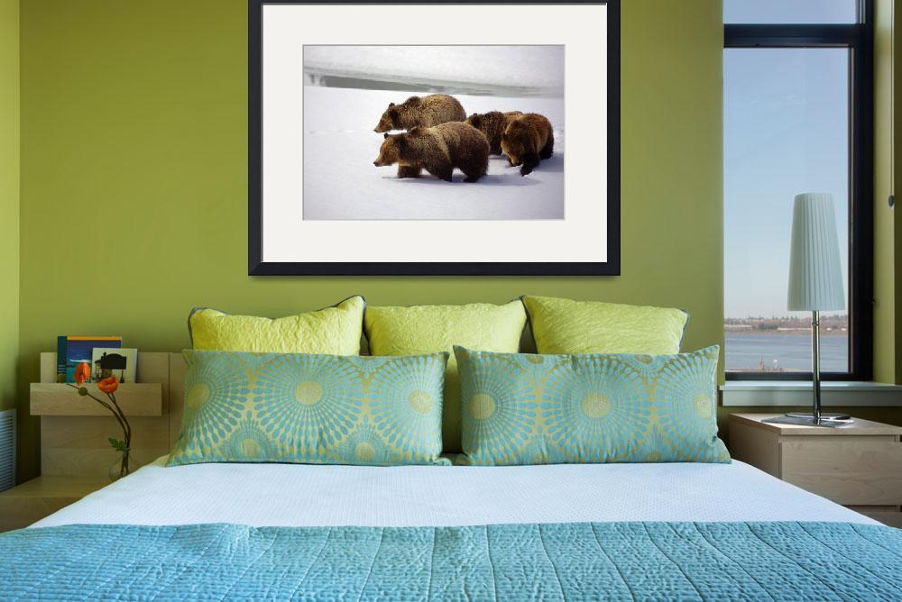 """""""Grizzly Bear 399 and Her Cubs&quot  (2008) by cavaroc"""