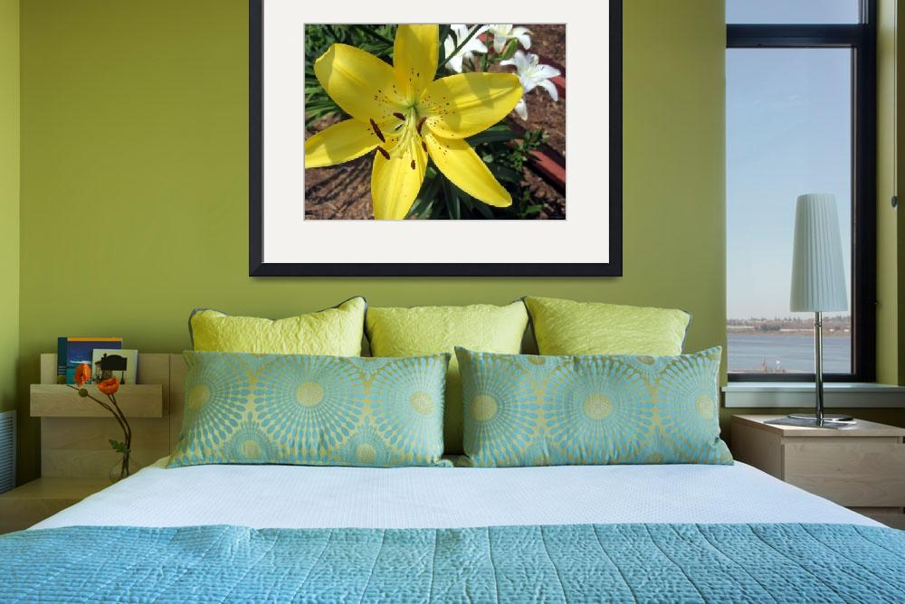 """""""Yellow and Whtie Lilies""""  (2011) by johnscanvassprints"""