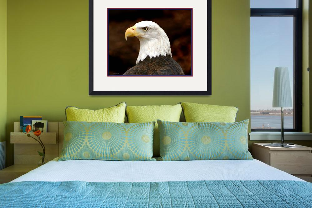 """Bald Eagle&quot  (2011) by nancielaing"