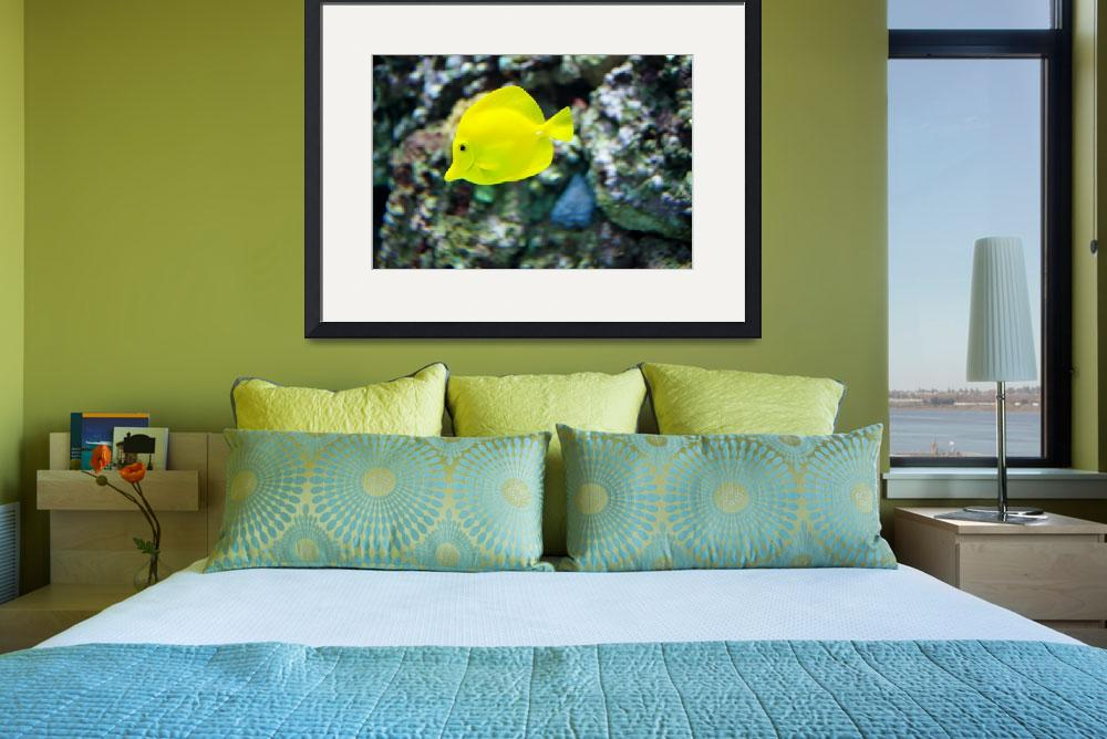 """1 yellow fish""  (2009) by imagineit"
