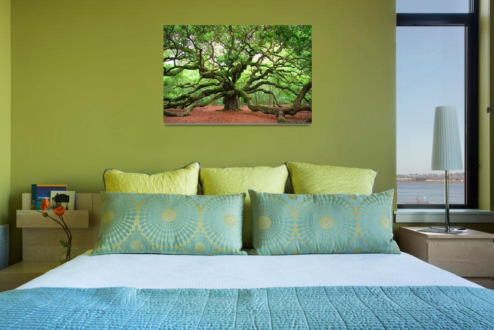 """""""Angel Oak&quot  (2010) by kenrainwaterphotography"""