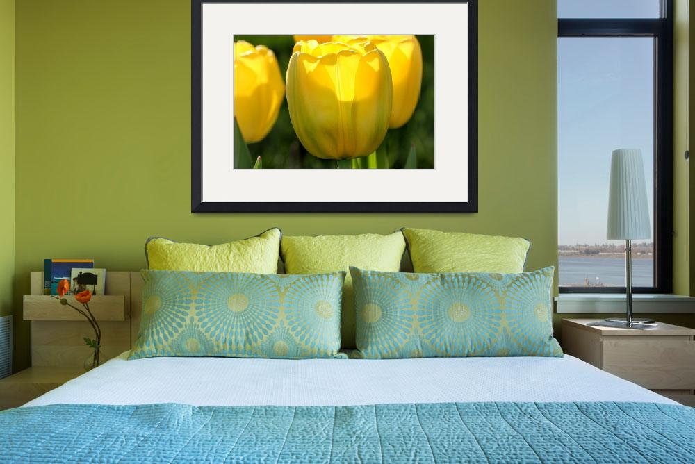 """""""Yellow Tulips in the Morning 2016&quot  (2016) by KsWorldArt"""