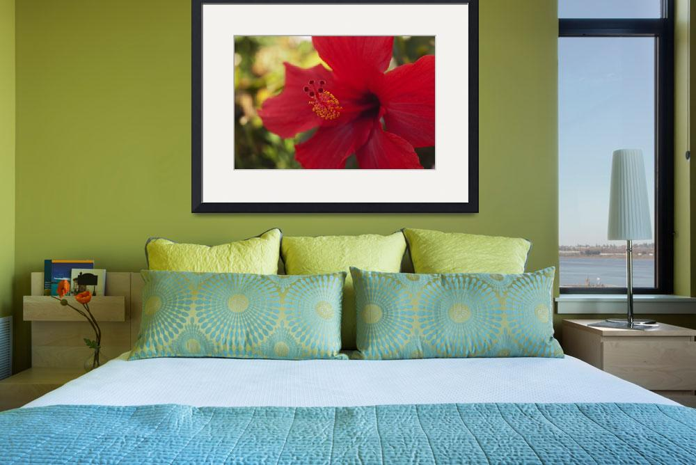 """Single, Stunning Red Hibiscus_0978&quot  (2004) by AmbientCreations"