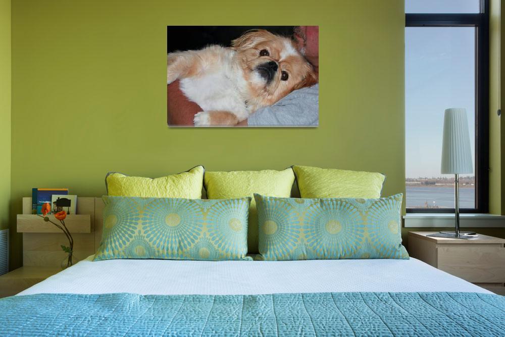 """""""Cute Colorado Dog&quot  (2012) by belinda_baardsen"""