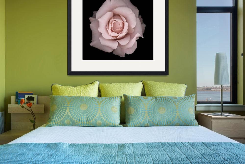 """Romantic Rose""  (2012) by OGphoto"