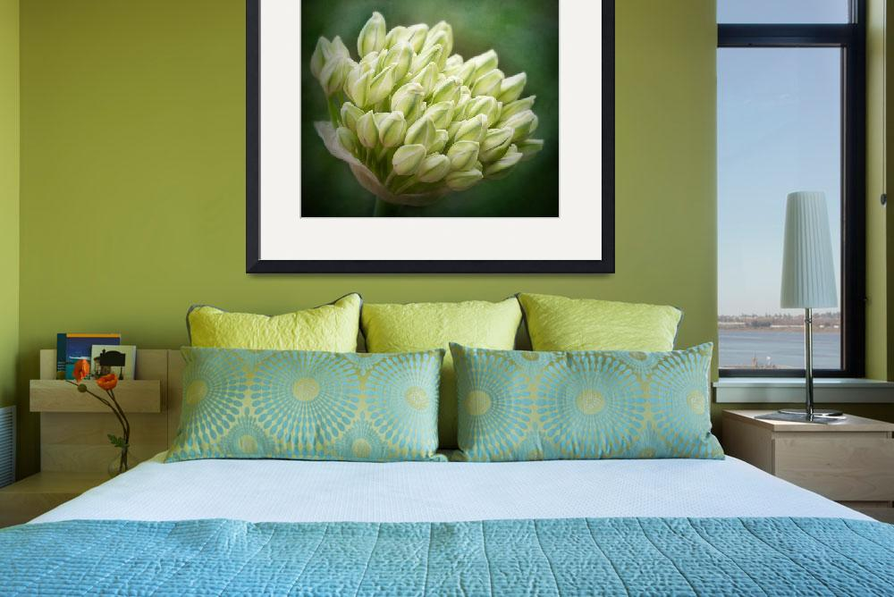 """""""Agapanthus""""  (2012) by IanBarber"""
