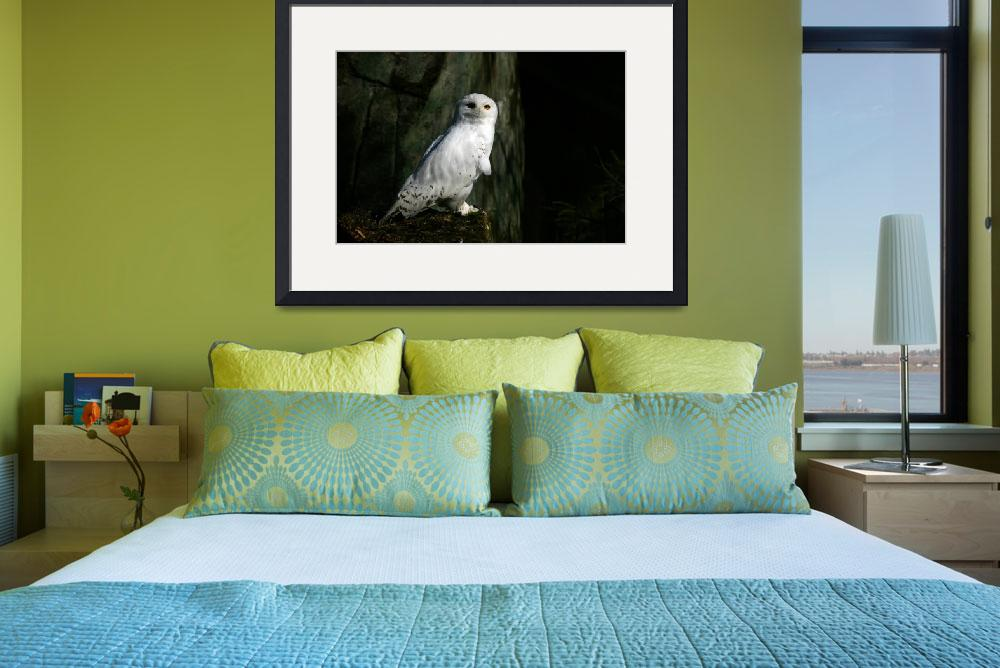 """""""Snowy owl&quot  (2010) by mellting"""
