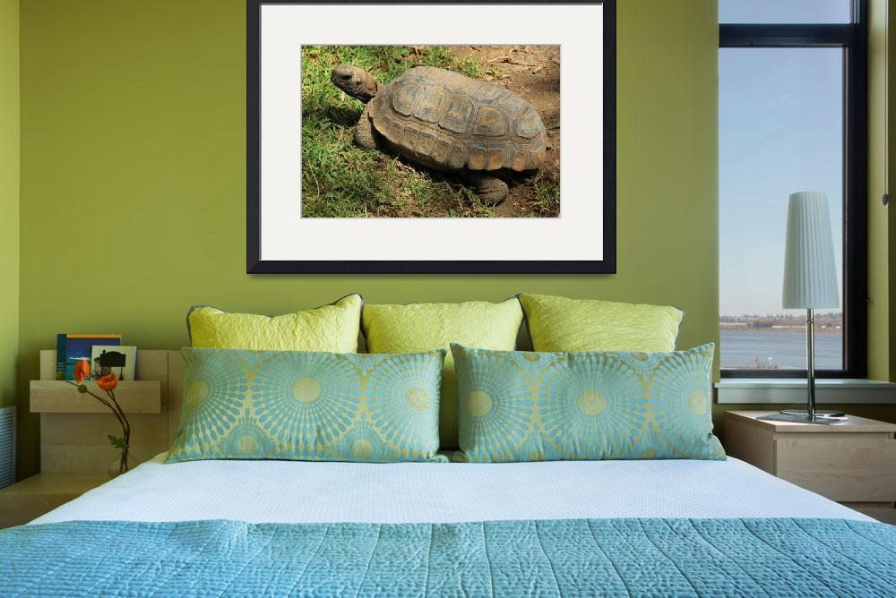 """""""Amazon River Turtle&quot  (2015) by rhamm"""