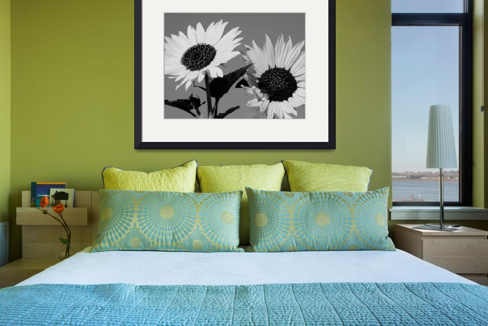 """""""Black and White Sunflowers&quot  (2011) by photosbybritney"""
