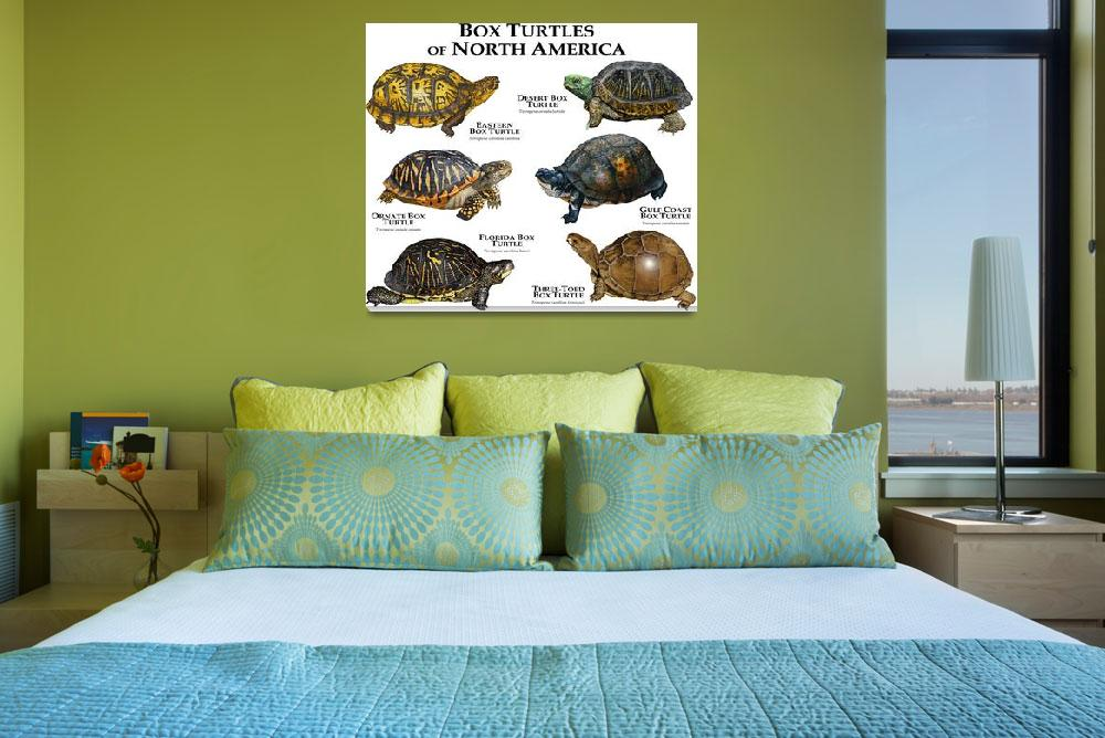 """""""Box Turtles&quot  (2013) by inkart"""