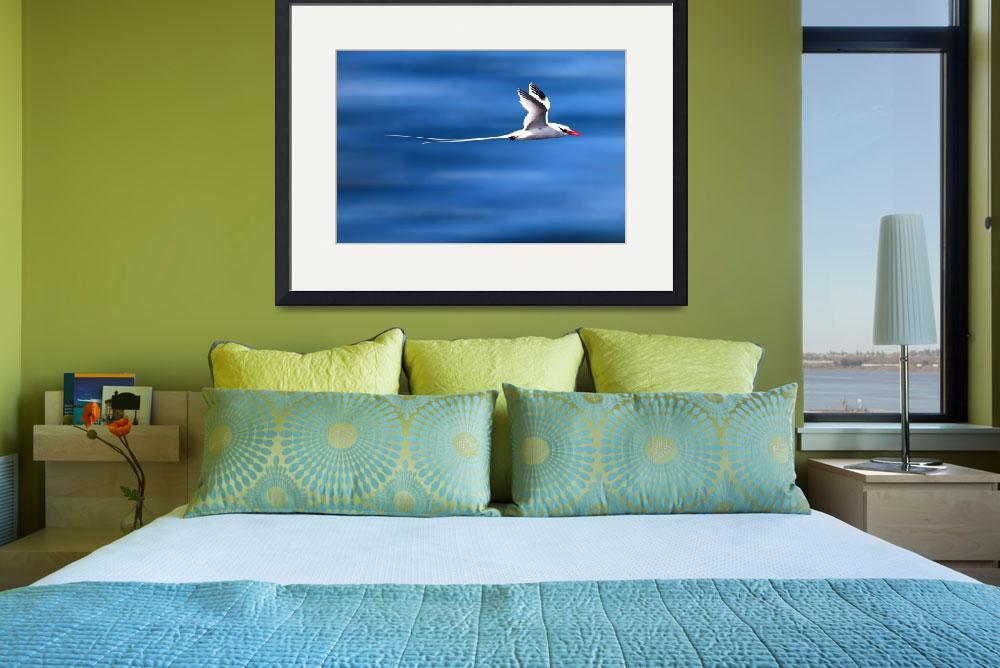 """Tropic Bird In Flight - Galapagos&quot  (2009) by BrianLewis"