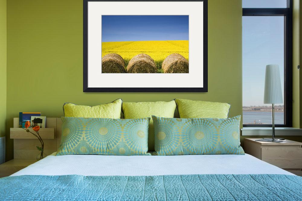 """""""Hay Bales And Canola Field, North Yorkshire, Engla&quot  by DesignPics"""