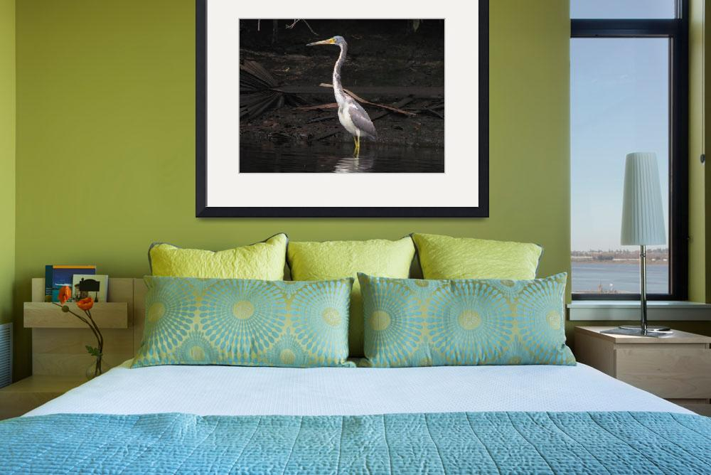 """""""Portrait of a Tri-colored Heron&quot  by BABowenphotography"""