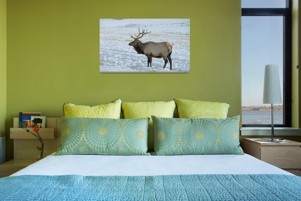 """""""Bull Elk 1""""  (2010) by SamSherman"""