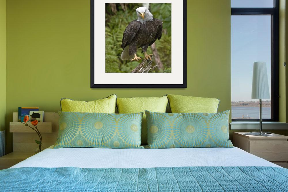 """Bald Eagle at Anan Creek&quot  (2008) by SederquistPhotography"