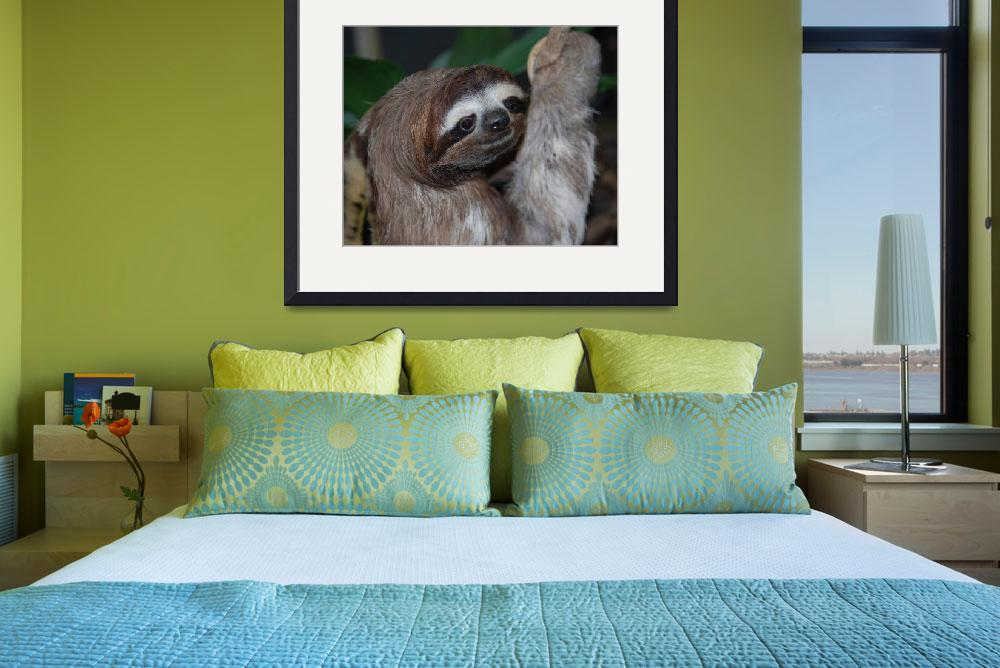 """Sloth""  by Rmbartstudio"