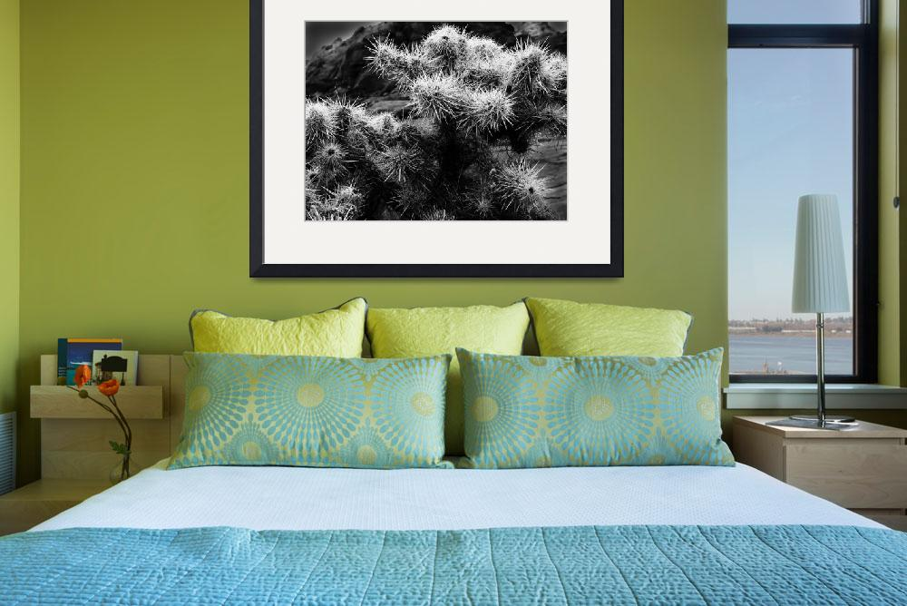 """""""Cholla Cactus No. 1&quot  (2007) by PadgettGallery"""