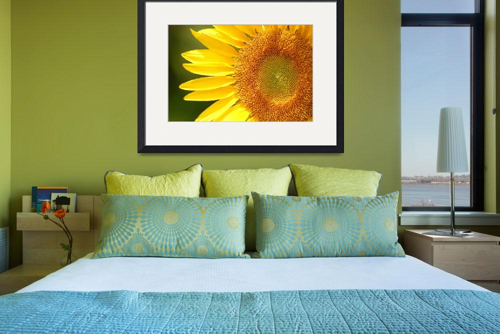 """""""Heart of the Sunflower&quot  by DavidBleakley"""