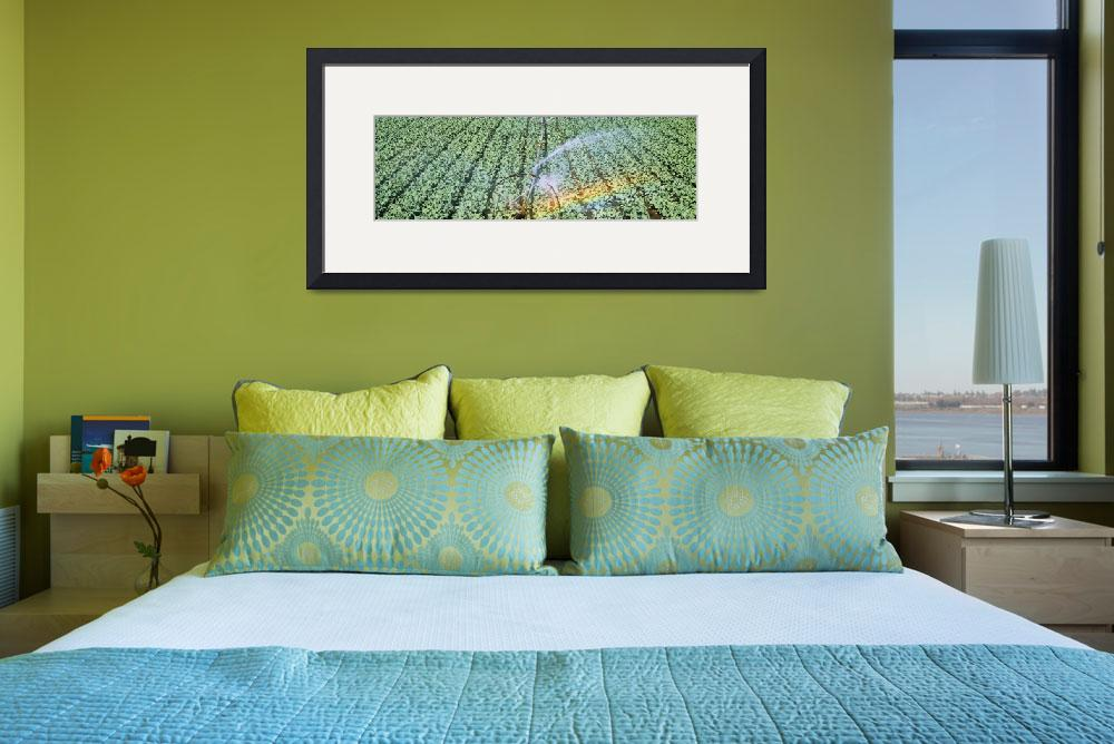 """""""Irrigation Broccoli Crop OR""""  by Panoramic_Images"""