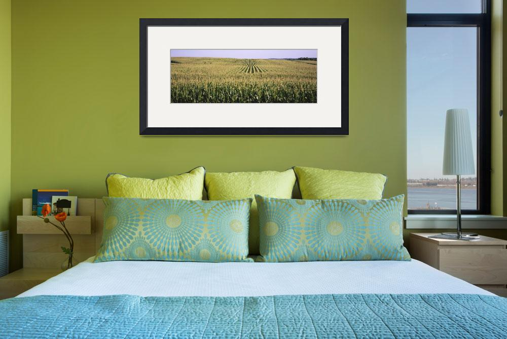 """""""Corn crop in a field&quot  by Panoramic_Images"""